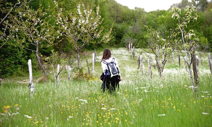 Hiking Mugello Apennines